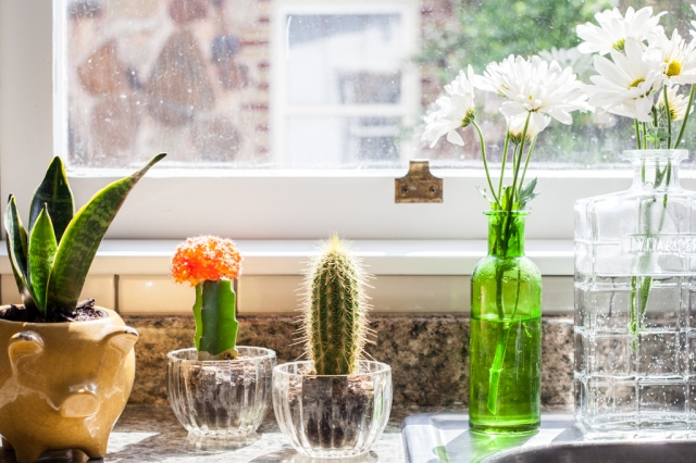 Plants as decor in the kitchen